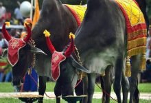 Cambodia Royal Ploughing Ceremony