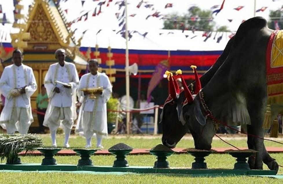 Cambodia traditional royal ploughing ceremony